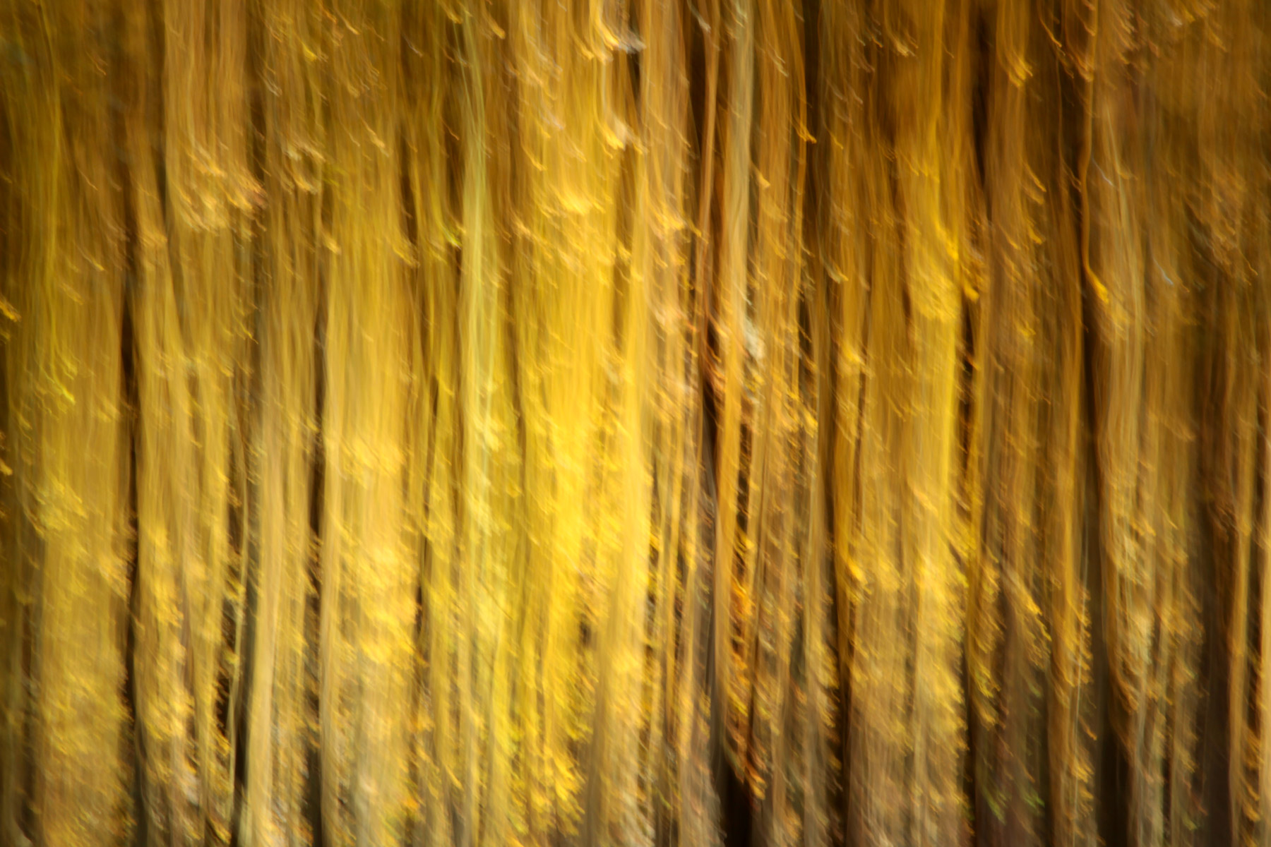 Vor lauter Bäumen XI, 2017, Fotografie