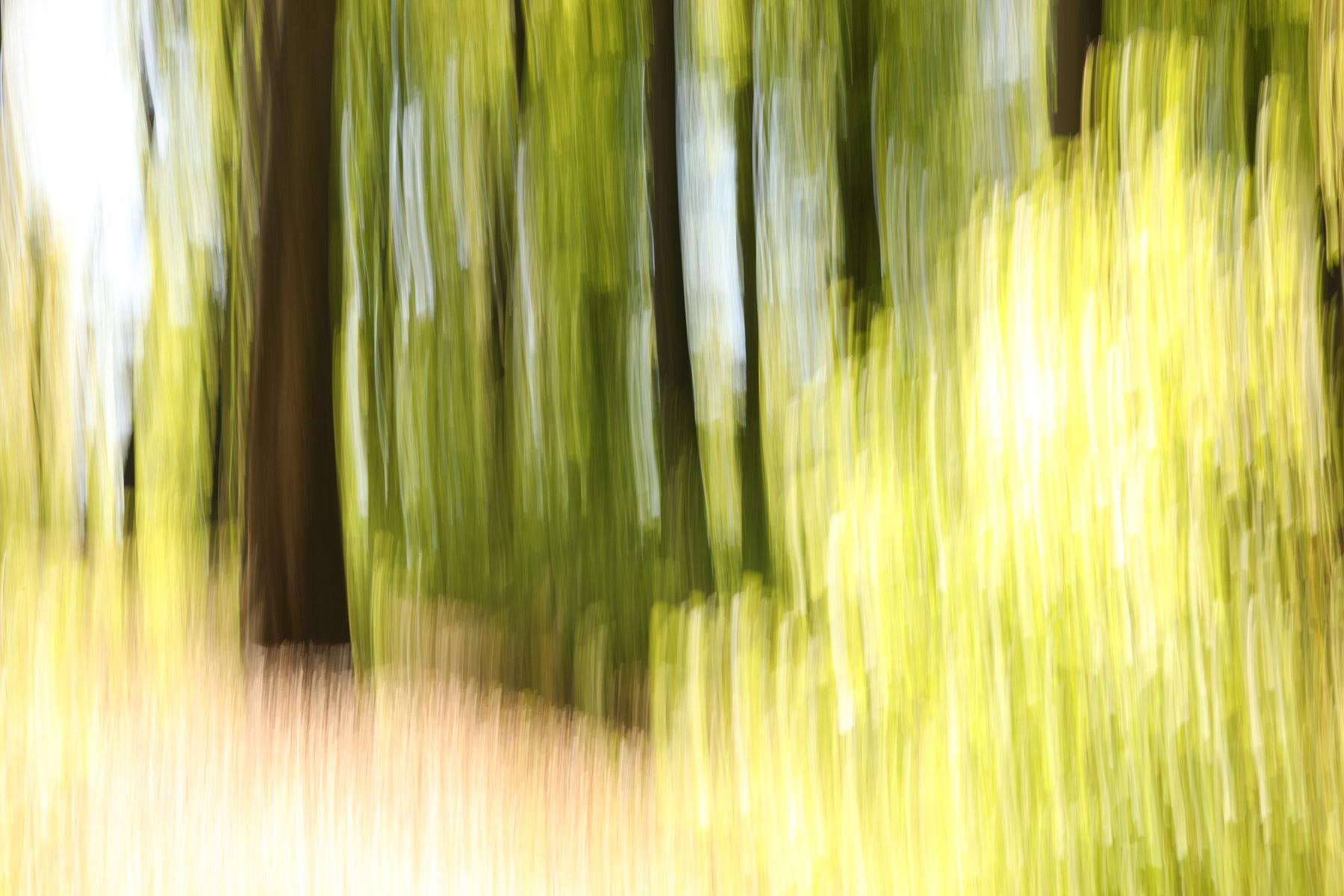 Vor lauter Bäumen XVII, 2020, Fotografie
